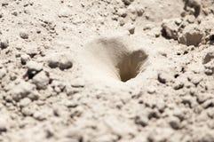 Pièges d'insecte dans le sable photos stock
