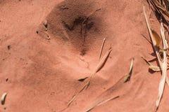 Pièges d'insecte dans le sable Photo libre de droits