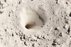 Pièges d'insecte dans le sable images stock