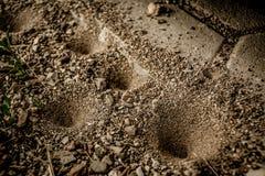 Pièges de mine de sable d'Antlion Photo stock
