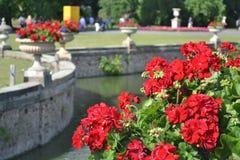 Piédestal de fleur Image libre de droits