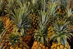 Piña de la fruta tropical Imágenes de archivo libres de regalías