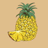 Piña en estilo del vintage Ilustración coloreada del vector Fotos de archivo