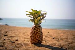 Piña en una playa exótica imagen de archivo