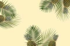 Piña y kiwi de la visión superior flatlay Copyspace mínimo de la bandera del verano Palma verde fotos de archivo