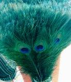 pióra pawia Obraz Royalty Free