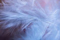 Piórka, makro- fotografia zdjęcia royalty free