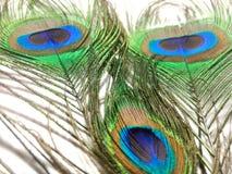 Piórka paw lub pawica Zdjęcie Stock