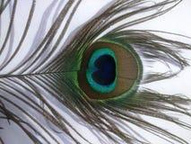 Piórka paw lub Peafowl Zdjęcie Royalty Free