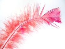 piórko 2 różowe Fotografia Royalty Free