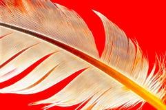piórko abstrakta Obraz Royalty Free