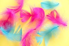 Piórko abstrakta tło Tło dla projekta z miękkim colorfull piórek wzorem Miękcy puszyści piórka na turkusie, dnia d Zdjęcia Stock