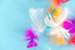 Piórko abstrakta tło Tło dla projekta z miękkim colorfull piórek wzorem Miękcy puszyści piórka na turkusie, dnia d Obrazy Stock