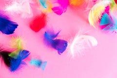 Piórko abstrakta tło Tło dla projekta z miękkim colorfull piórek wzorem Miękcy puszyści piórka na turkusie, dnia d Zdjęcie Stock