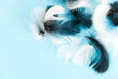Piórko abstrakta tło Tło dla projekta z miękkim colorfull piórek wzorem Miękcy puszyści piórka dalej Obraz Stock