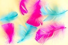 Piórko abstrakta tło Tło dla projekta z miękkim colorfull piórek wzorem Miękcy puszyści piórka na turkusie, dnia d Obraz Royalty Free