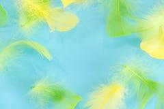 Piórko abstrakta tło Tło dla projekta z miękkim colorfull piórek wzorem Miękcy puszyści piórka na turkusie, dnia d Fotografia Stock