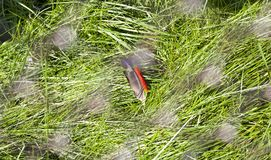 Piórko na trawie, zakończenie obrazy stock