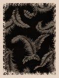 piórko tła ilustracji