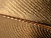 piórko złoto Zdjęcie Royalty Free