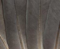 Piórkowa tekstura Zdjęcia Stock