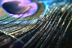 Piórkowy makro- Zdjęcie Stock