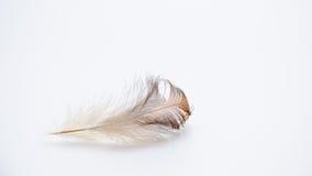 Piórkowy natury skrzydła ptak Obrazy Stock