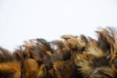 Piórkowy natury skrzydła ptak Zdjęcie Royalty Free