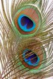 piórkowy oko paw Fotografia Stock