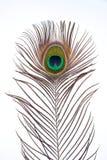 piórkowy paw zdjęcie royalty free