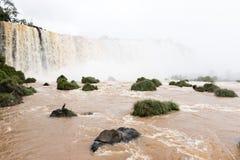 Più alta cascata delle cascate di Iguazu un veiw del fiume dal Brasile Fotografia Stock Libera da Diritti