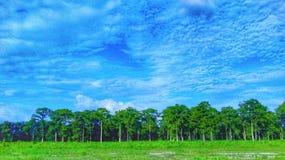 Più luminoso il cielo Fotografie Stock