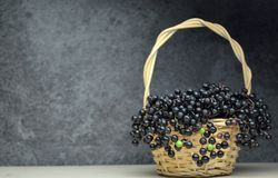 Più vecchio eco di frutta fresca del succo della bacca bio- fotografia stock