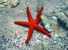 pięć świateł mijania czerwona gwiazda morska Obraz Stock