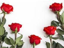Pięć czerwonych róż z kopii przestrzenią na białym tle fotografia royalty free