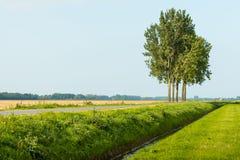Pięć drzew przeciw niebieskiemu niebu z rzędu Zdjęcia Royalty Free