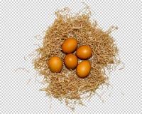 Pięć jajek kłamają w gniazdeczku, w górę, png zdjęcie royalty free