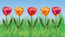 Pięć jaskrawych kwitnie tulipanów w trawie Zdjęcia Stock