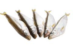 Pięć kawałków surowa delikatności ryba na białym tle przed kulinarnym proteinowym diety naczyniem obrazy stock