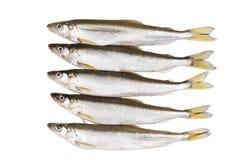 Pięć kawałków surowa delikatności ryba na białym tle przed kulinarnym proteinowym diety naczyniem fotografia stock