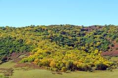 pięć kolorów jesieni halna sceneria Fotografia Royalty Free