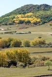 pięć kolorów jesieni halna sceneria Zdjęcie Royalty Free