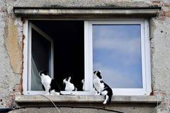 Pięć kotów na nadokiennym parapecie Obrazy Royalty Free