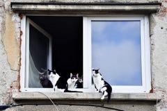 Pięć kotów patrzeje kamerę na nadokiennym parapecie Zdjęcia Royalty Free