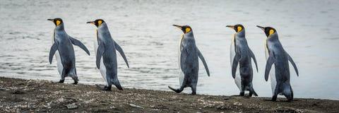 Pięć królewiątek pingwinów w linii na plaży Zdjęcie Stock