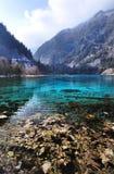 Pięć Kwiat jezioro przy Jiuzhaigou parkiem narodowym, Sichuan, Chiny Obraz Stock