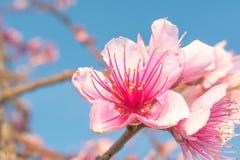 Pięć punktów kwiat Zdjęcia Royalty Free