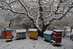 Pięć rojów i starych dokrętki zakrywają z śniegiem fotografia royalty free