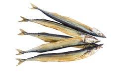 Pięć ryba na białym tle Obrazy Royalty Free