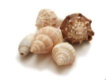 pięć seashells spirala zdjęcia royalty free